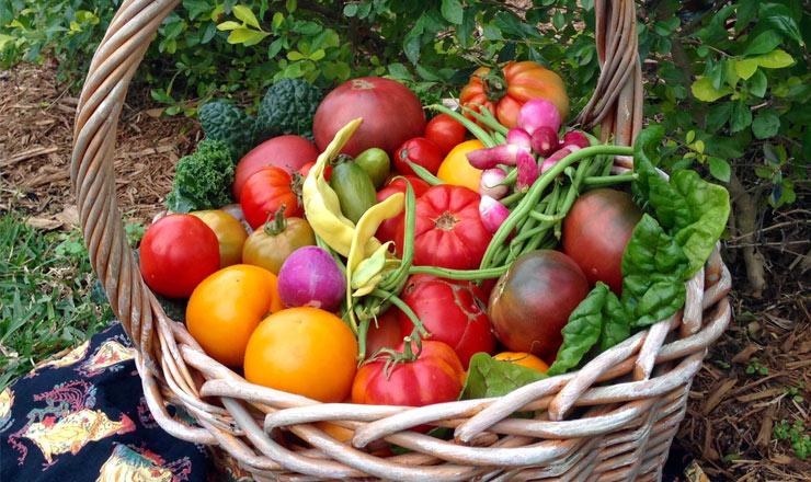 farm-to-table-2